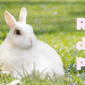 easter-bunny-3201433-1920